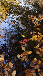 Autumn Reflecting Pool, Bear River Maine