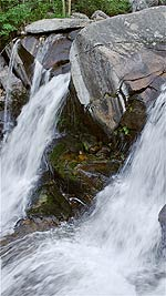 Mountain Waterfall with Water Ouzels, Wyoming